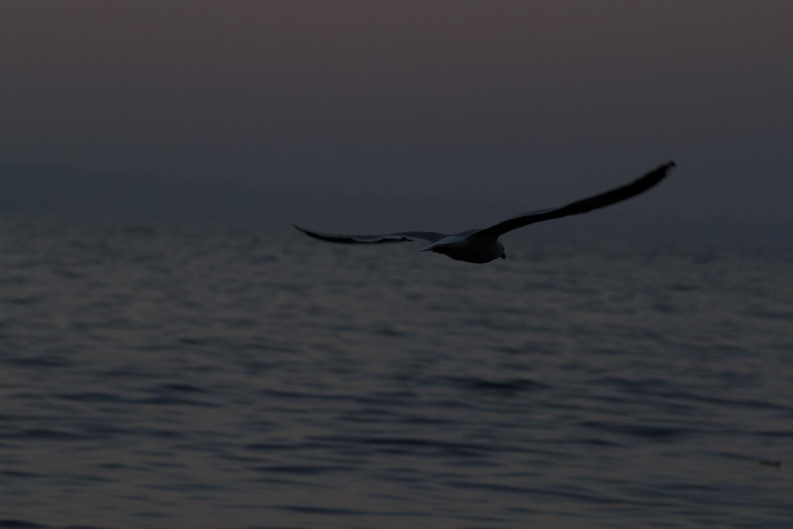 volo verso la libertà