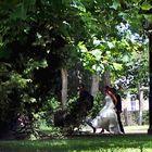 Voluptueuse et si blanche, où vas-tu sous les branches?