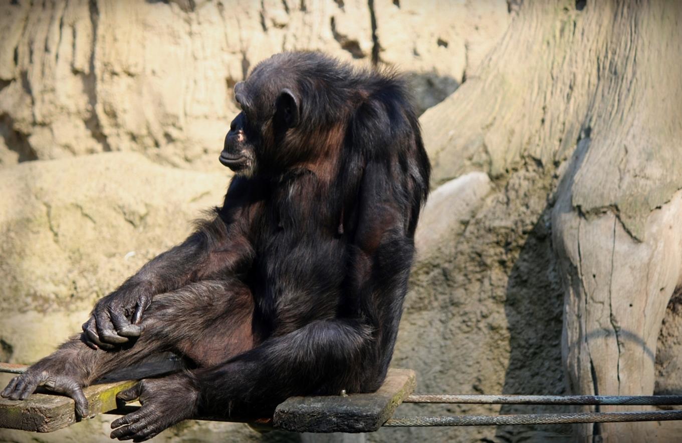 vom Affen gebissen . . . Foto & Bild | tiere, zoo