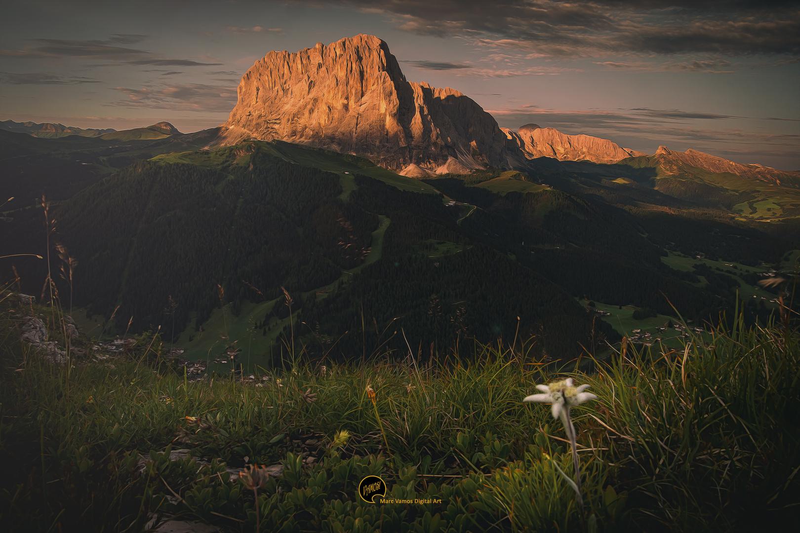 Vom Berg, da grüßt ein Edelweiß