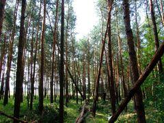 Vom Blitz getroffen - in den Wald gesegelt - Die Einflugschneise vom Flügel -