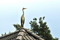 Vom Dach des Nachbargrundstücks aus ...