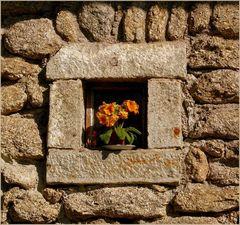 Vom Fensterbankl aus g'sehn