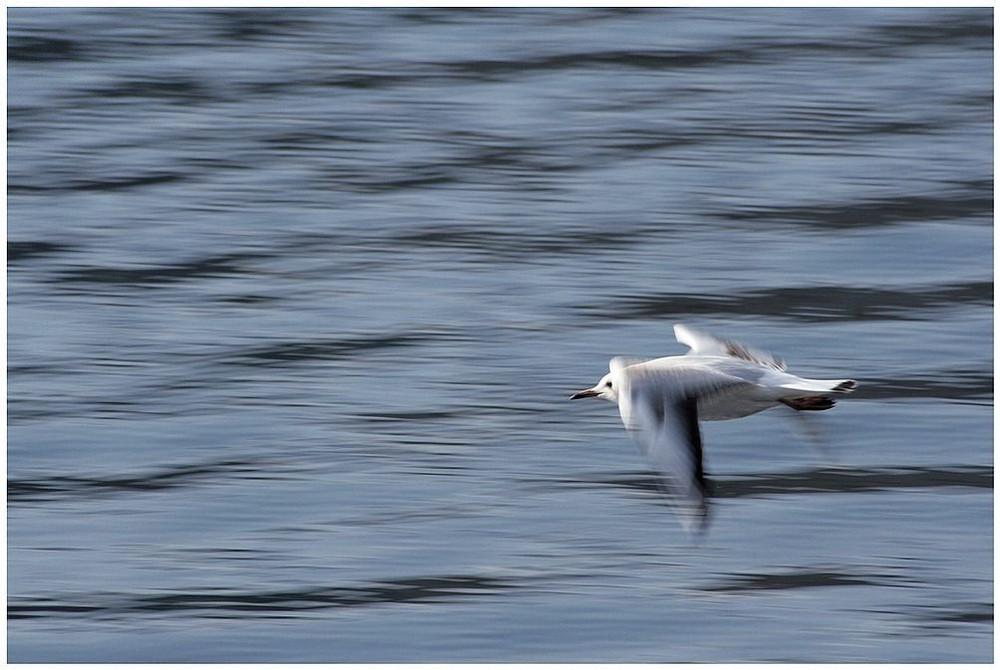 Vom Fliegen über das Meer
