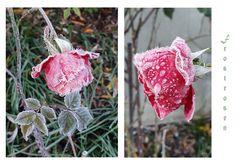 Vom Frost kristallisiert