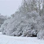 vom kurzen , schönen  Gastspiel des Winters