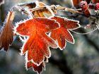..vom letzten Herbst..