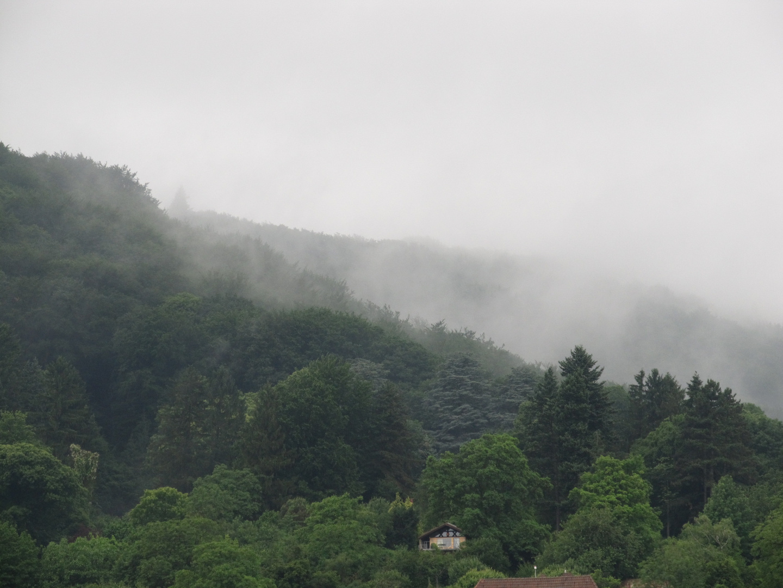 Vom Nebel bedeckt