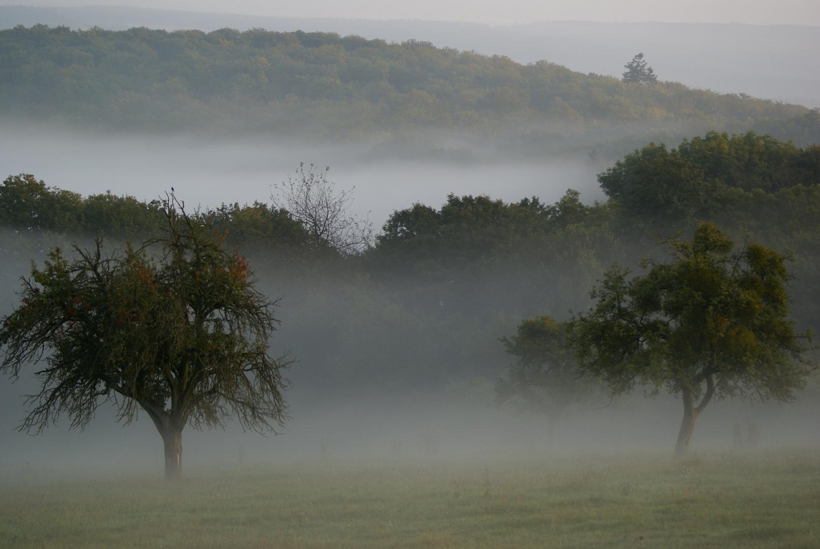 Vom Nebel verschleierter Herbstwald