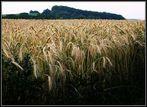 Vom reichen Kornbauern (Sonntagsbild)