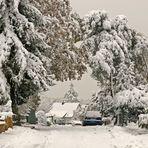 Vom Schnee gebeugt...