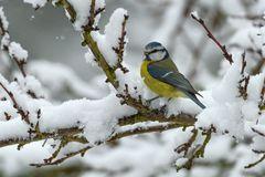 °°_Vom Schnee überrascht_°°