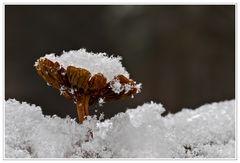 Vom Schnee überrascht.....