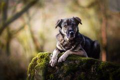... vom Strassenhund ...