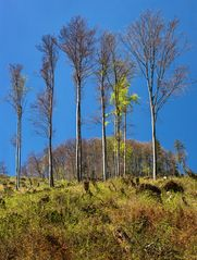 Vom Sturm verschonte Baumgruppen bei endlich schönem Frühlingswetter!