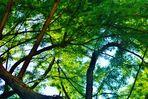 vom Träumen unter Bäumen