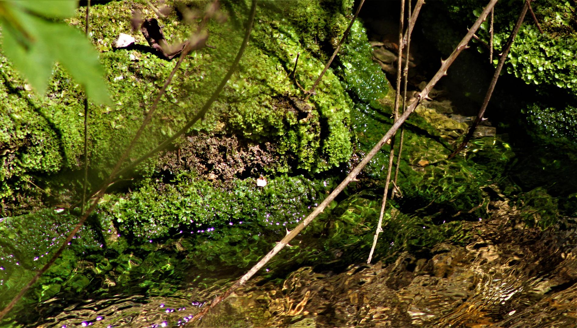 vom Wasser und seiner stetigen Bewegung