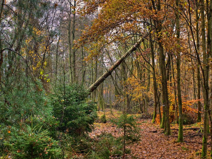 Vom Weg in den Wald