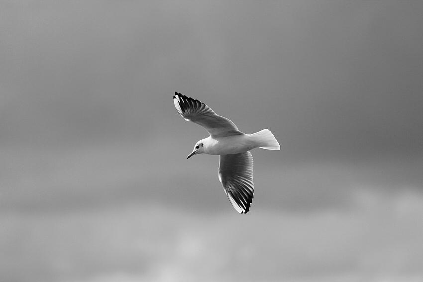 Vom Wind getragen