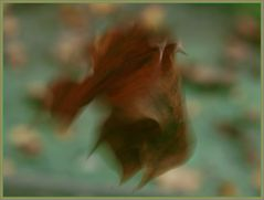 Vom Winde bewegt