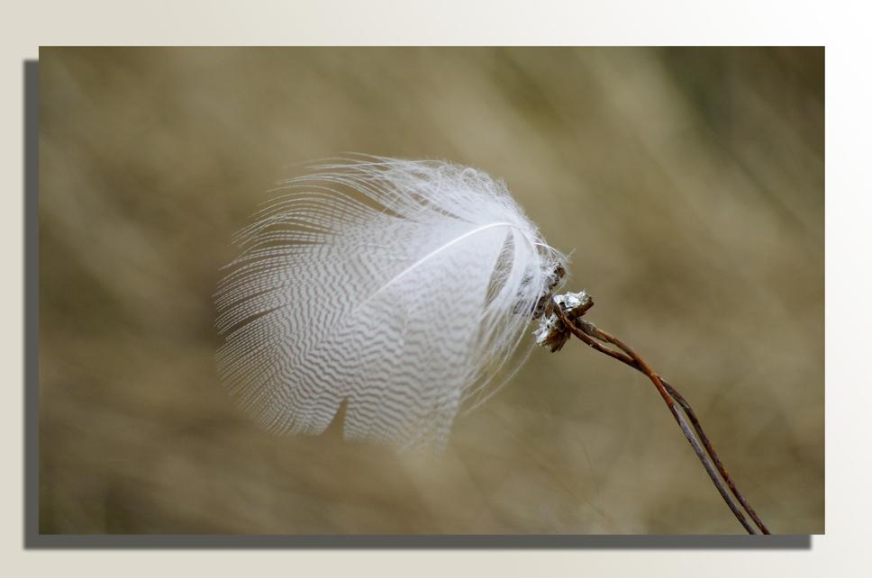 ...vom Winde verweht