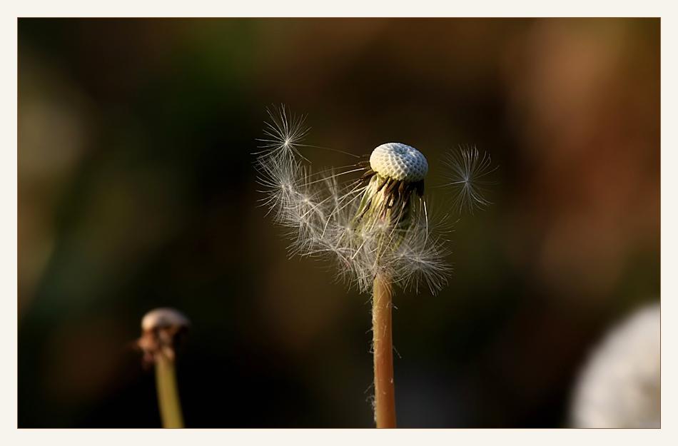 ...vom winde verweht......