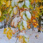 ... vom Winter überrascht ...