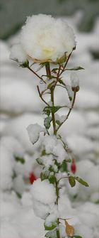 Vom Winter überrascht .....
