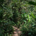 Vom Zauber des Regenwalds