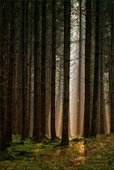 von Baum zu Baum