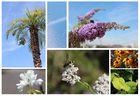 Von Bienchen, Blümchen und dem Sommer