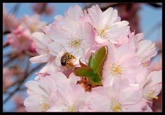 Von Bienen und Blumen *
