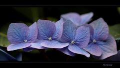 ... von Blumen ...