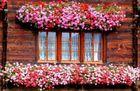 Von Blumen umrahmt