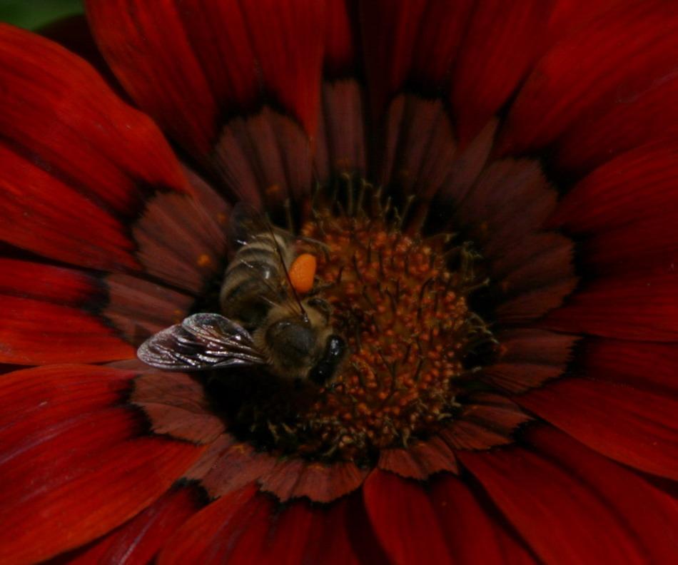 Von den Bienen und Blumen