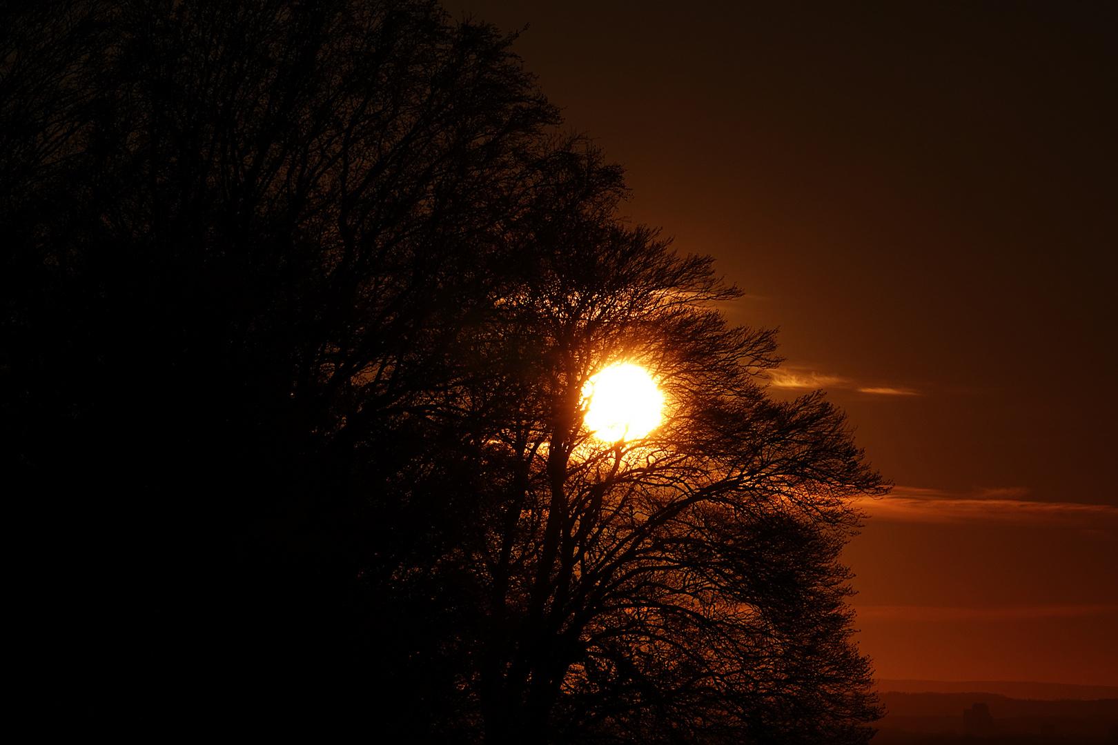 von der Abendsonne durchdrungen