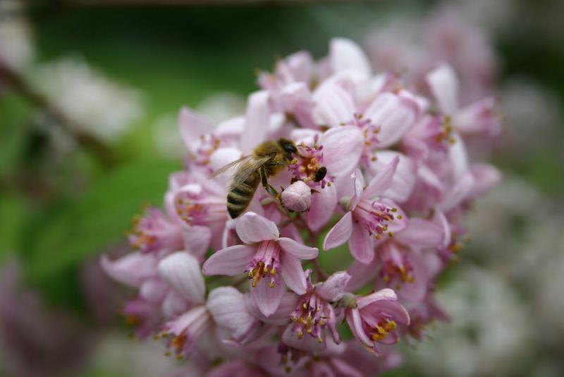 Von der Geschichte mit dem Bienchen und dem Blümchen