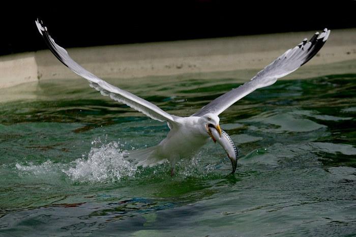 Von der Kunst, gleichzeitig fliegen und fressen zu können...
