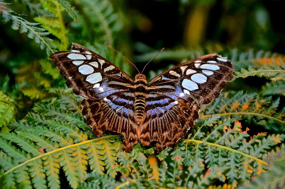 Von Der Raupe Zum Schmetterling Foto Bild Tiere Zoo