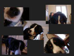 Von der Schwierigkeit, einen Hund zu fotografieren