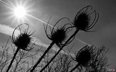 Von der Sonne verdrängt