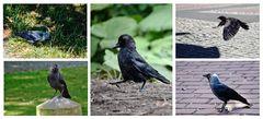 Von einem Vogel verfolgt ....