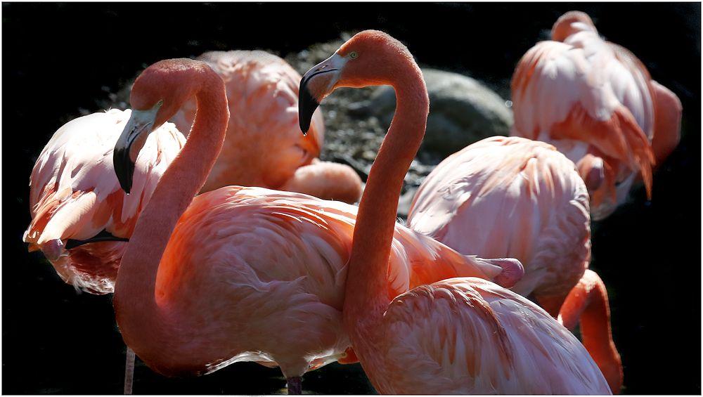 von flamingos...