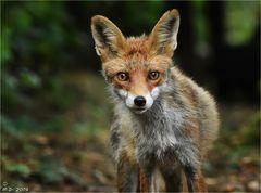 Von Foxi ...