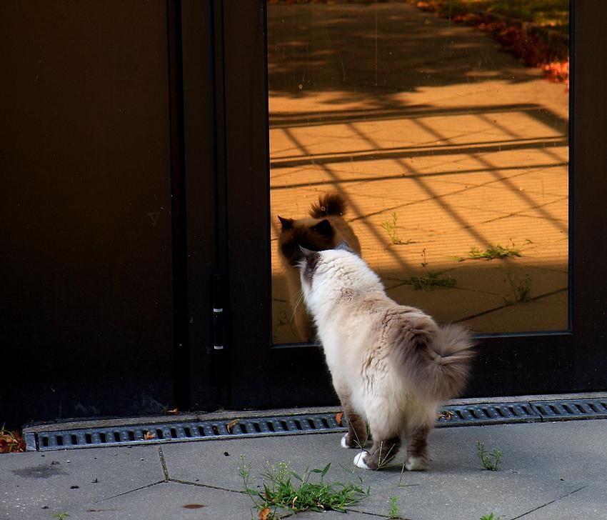 Von Katzen lernen heißt Leben lernen - Lektion 2