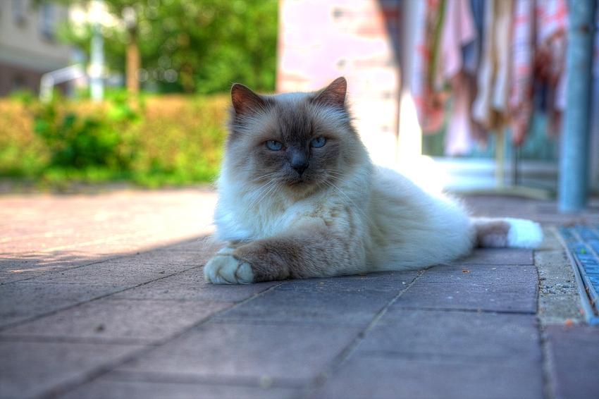 Von Katzen lernen heißt Leben lernen - Lektion 3