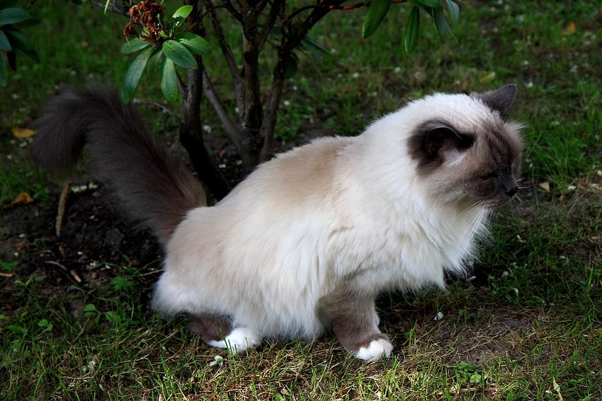 Von Katzen lernen heißt Leben lernen - Lektion 4