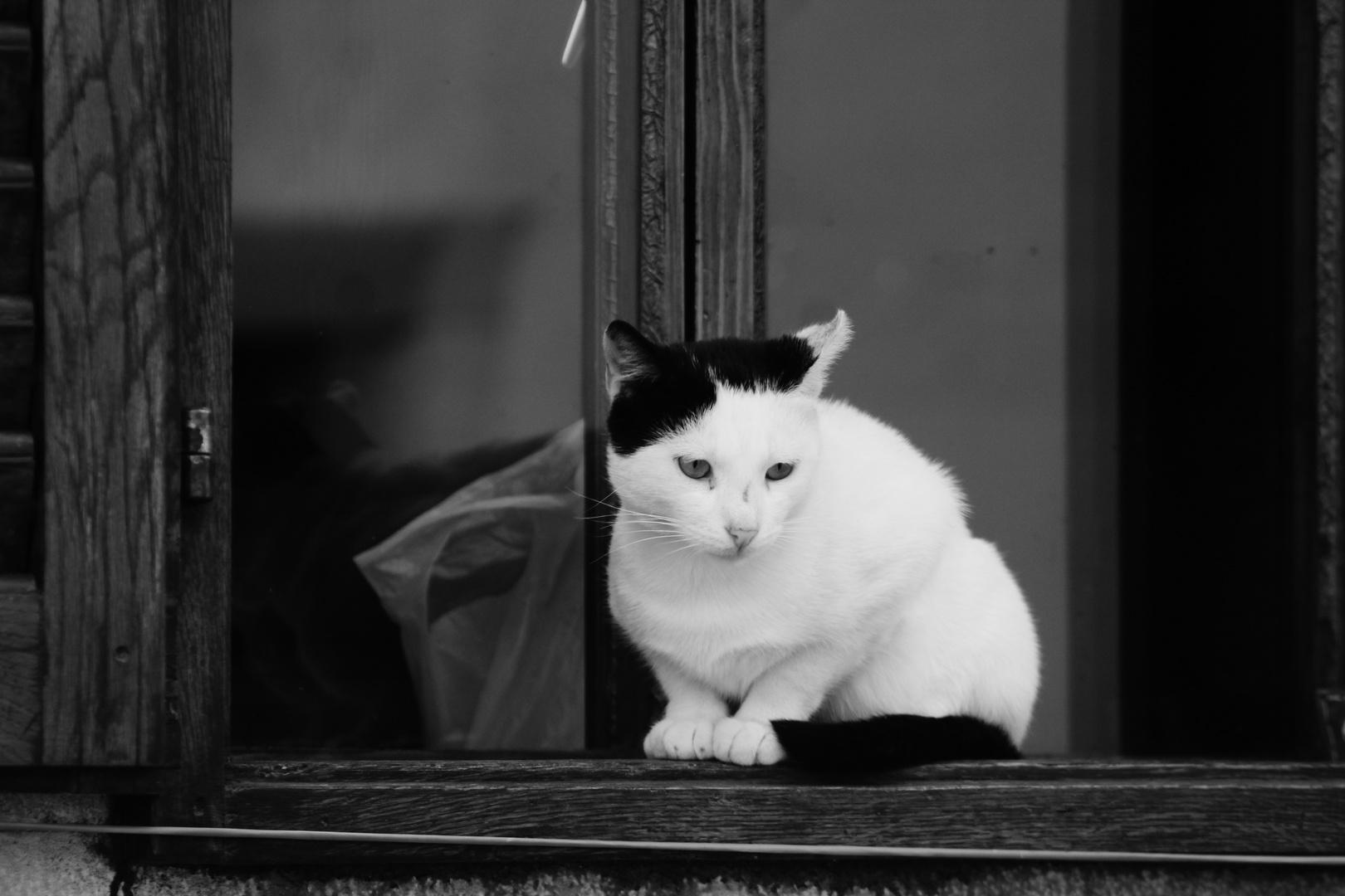 von Katzen und ihrer Fähigkeit  aus zu harren