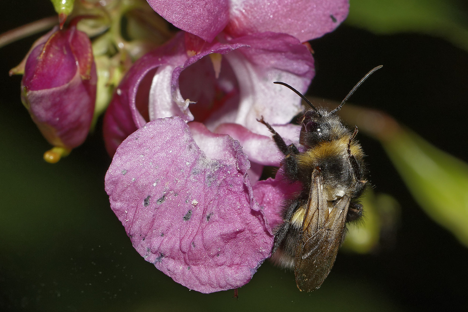 Von nah besehen :: Biene gelandet