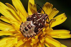 Von nah besehen :: Käfer